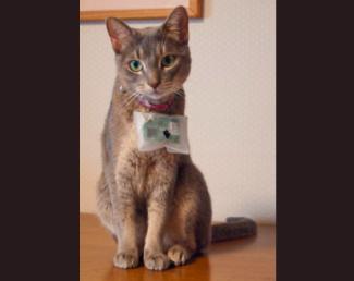 Cat@Log(ペット版ライフログ)
