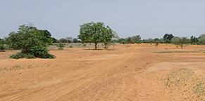 壊れゆく地球環境を農業から立て直す